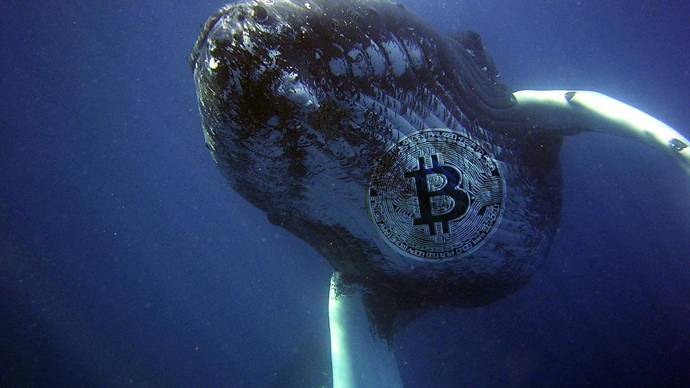 Ballenas mueven sus BTC hacia carteras de menor balance, dice estudio de Glassnode
