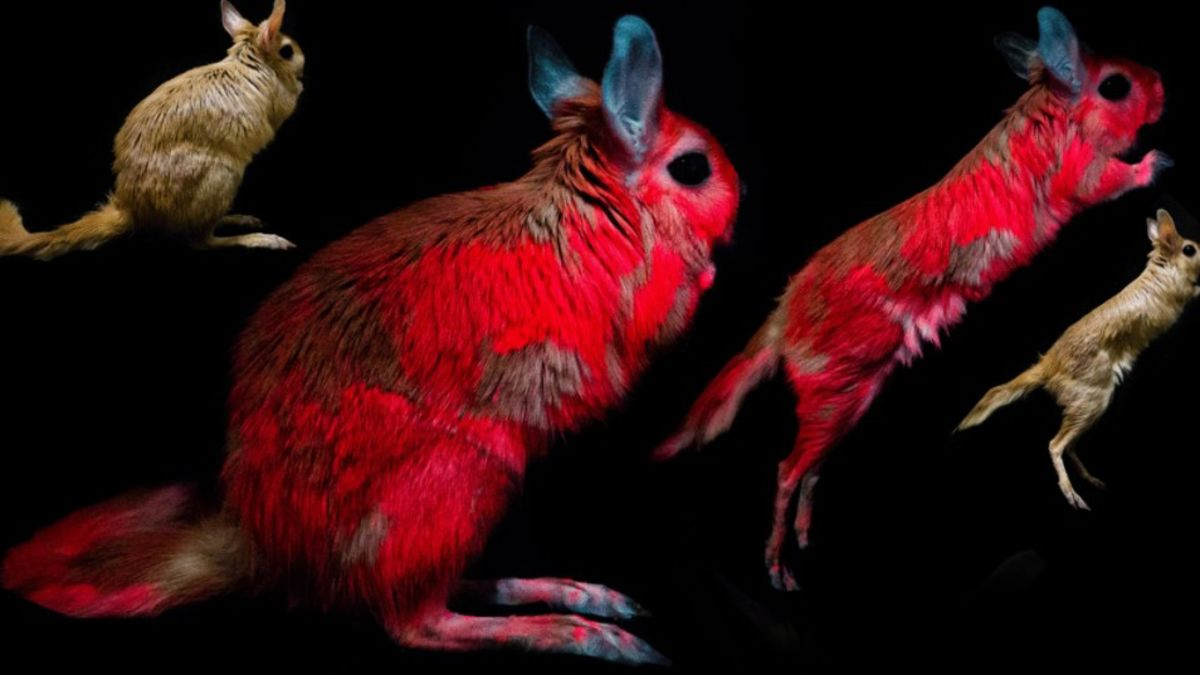 La razón por la que algunos animales brillan bajo luz UV