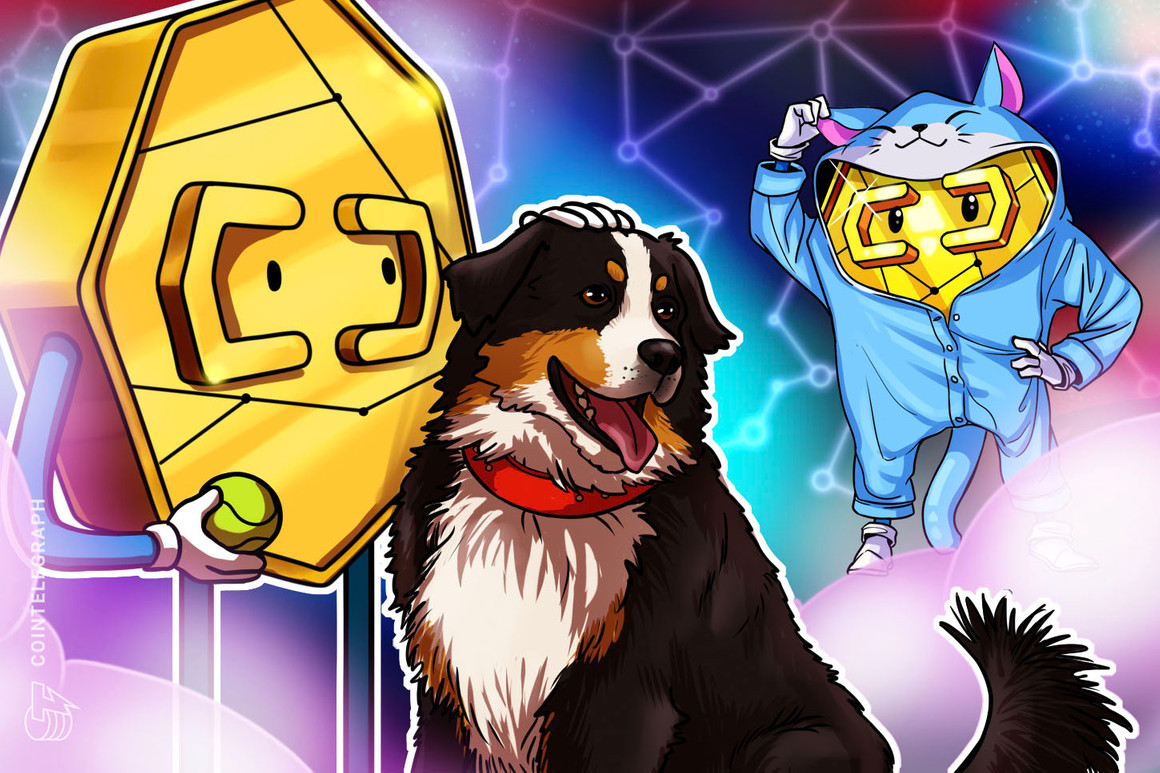 Los bitcoiners adoran a los perros, mientras los escarabajos del oro prefieren a los gatos, revela un estudio nuevo e importante