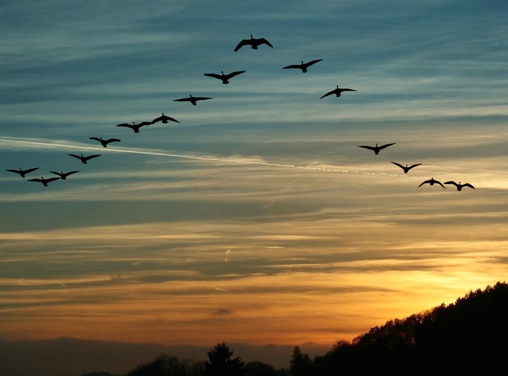 El fundador de Cardano espera que los pájaros aterricen en marzo mientras se recupera el sentimiento de la ADA