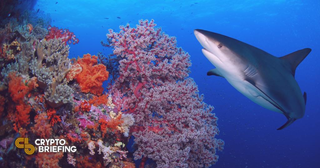 Alameda Research, Reef Finance Clash ofrece una advertencia severa sobre criptomonedas