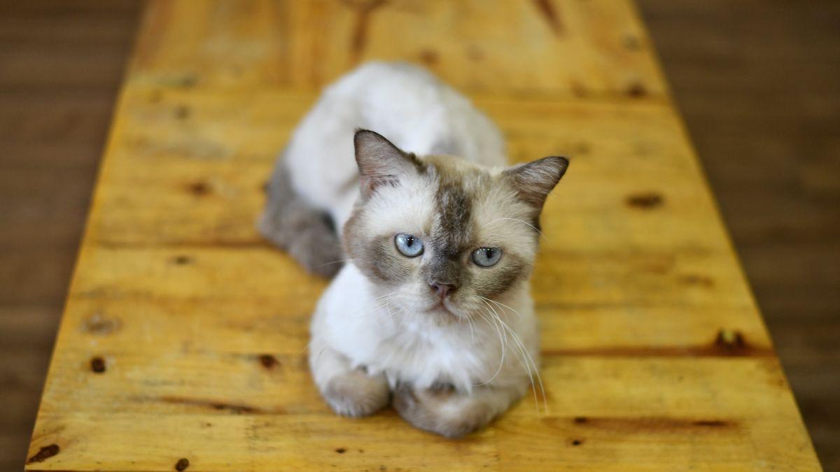 Los gatos son tan desleales como sospechabas, según un estudio