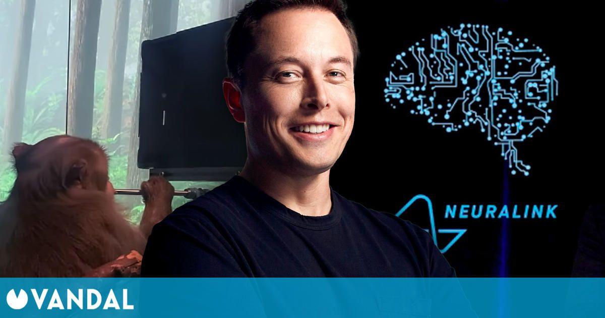 Elon Musk muestra un vídeo de un mono jugando a Pong con la mente gracias a Neuralink