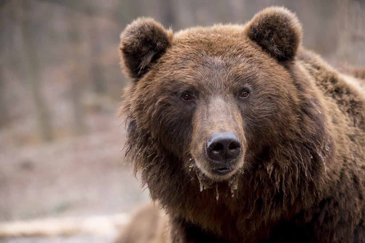 Los osos salvan mientras el cierre mensual de Bitcoin conduce a la indecisión