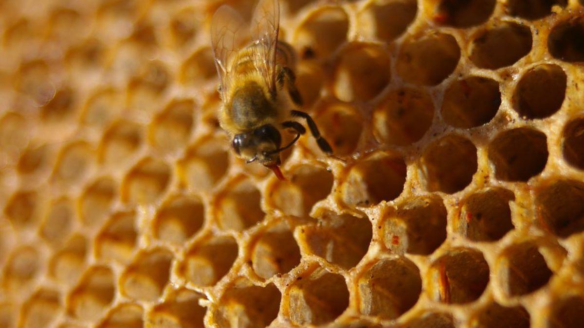 La miel de EE.UU contiene lluvia radioactiva de la Guerra Fría