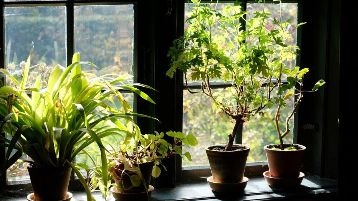 El truco para que las plantas de casa no mueran: filtro de café