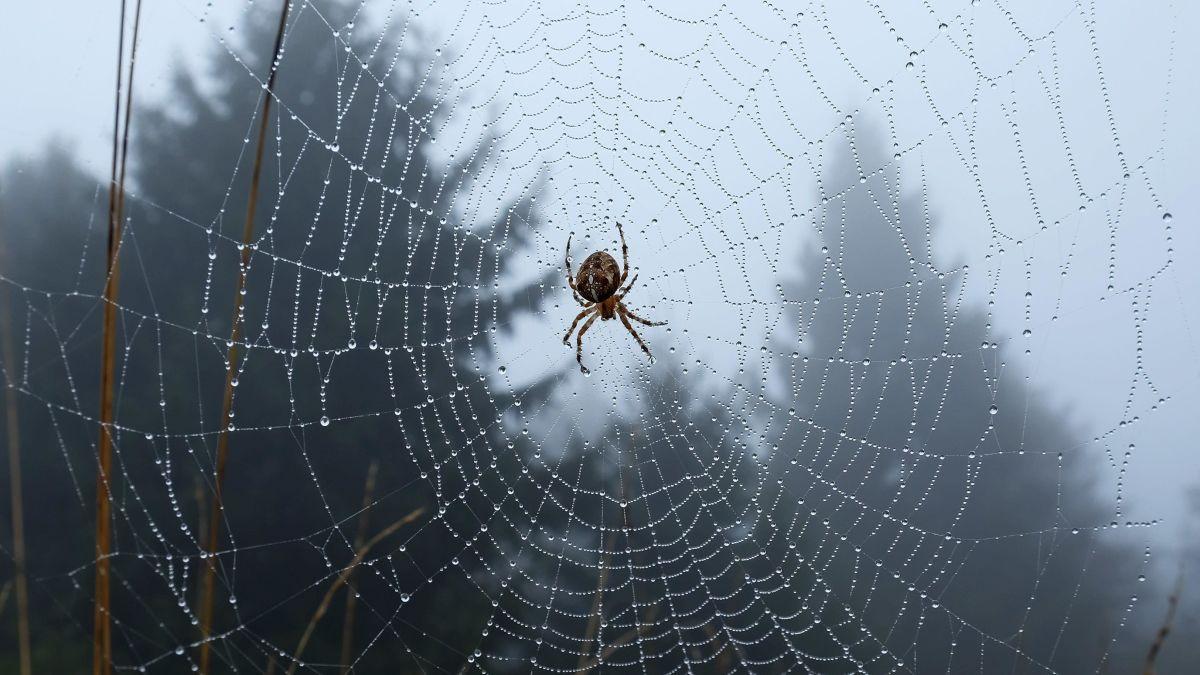 Estos investigadores del MIT trabajan en un método para hablar con las arañas
