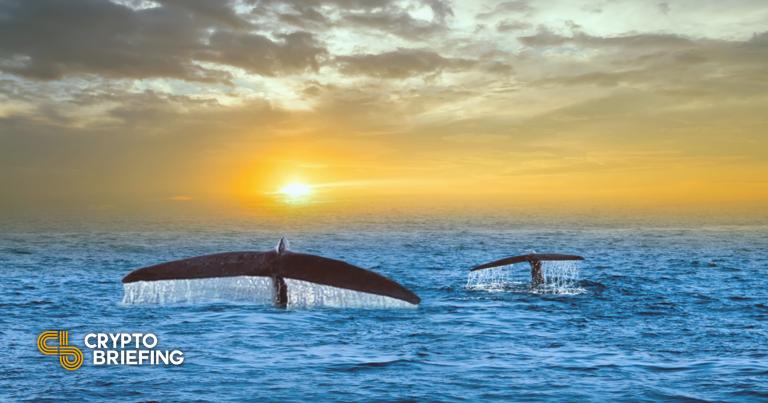 Las ballenas compran Ethereum después de que otros inversores vencieran el pánico