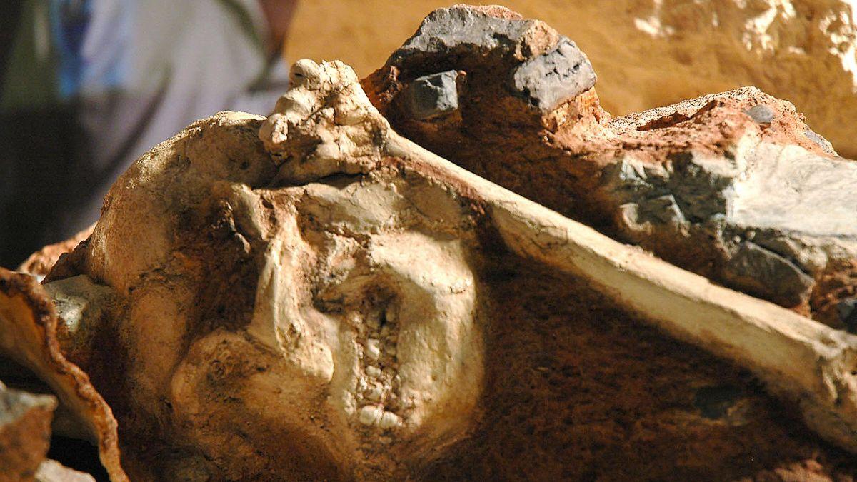 Descubren esqueleto fósil de antepasado humano que se balanceaba entre árboles