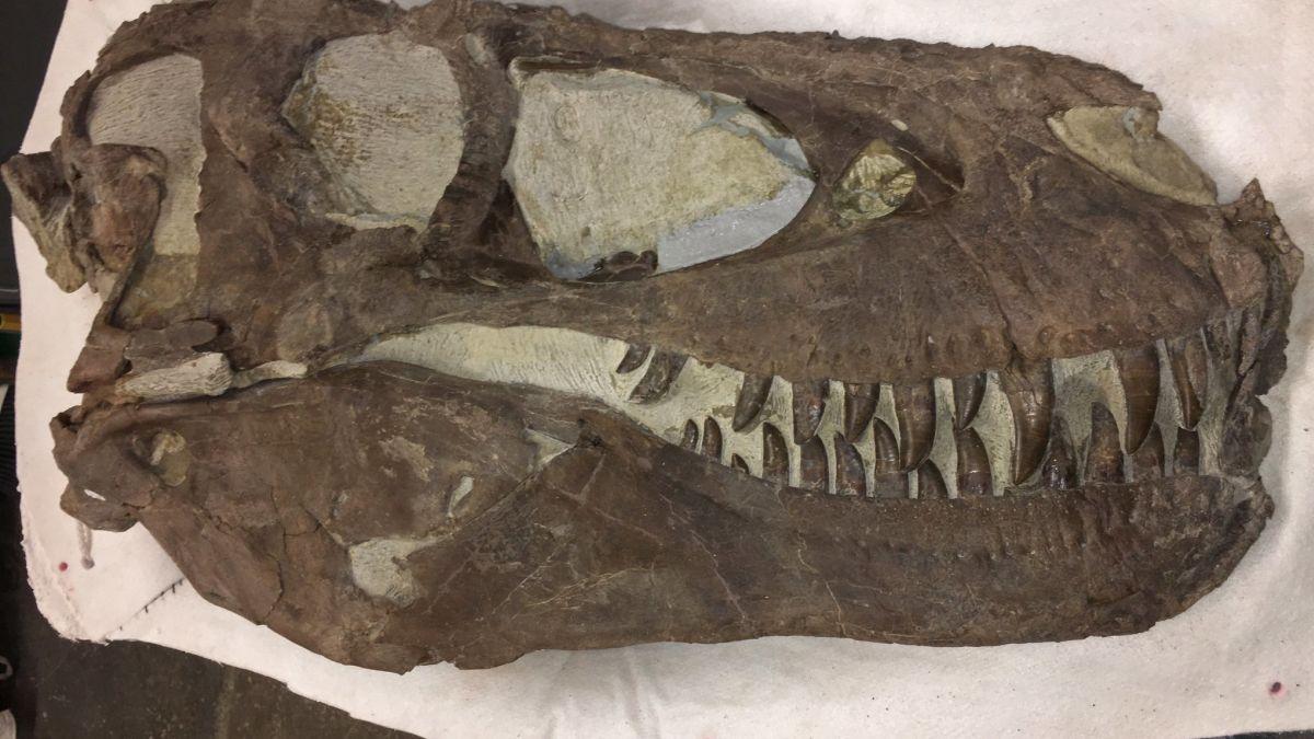 Hallan indicios de que los tiranosaurios cazaban en grupo