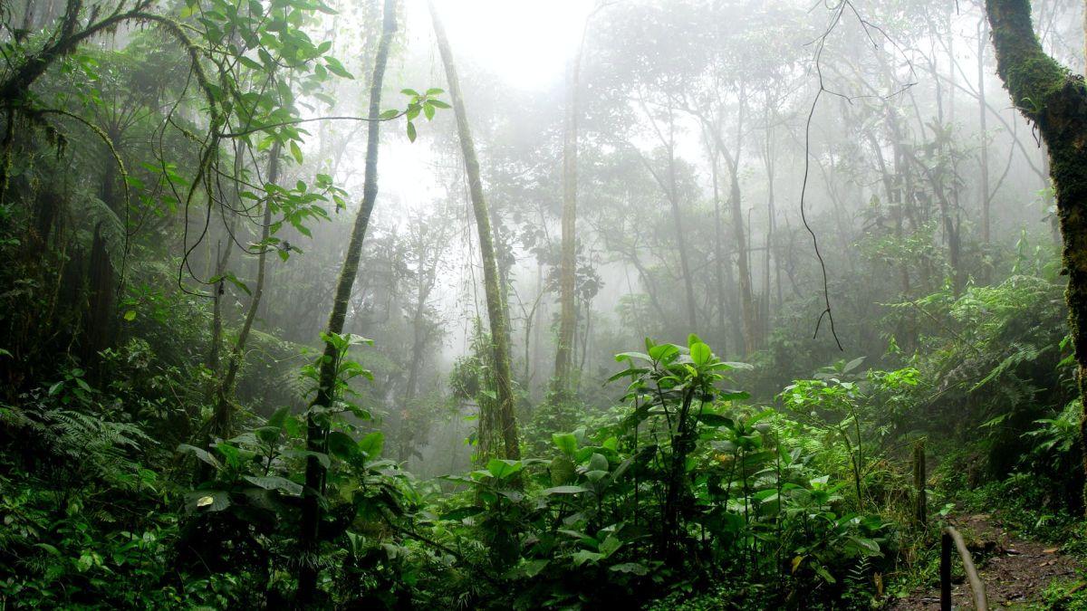 El mismo meteorito que mató a los dinosaurios creó el Amazonas