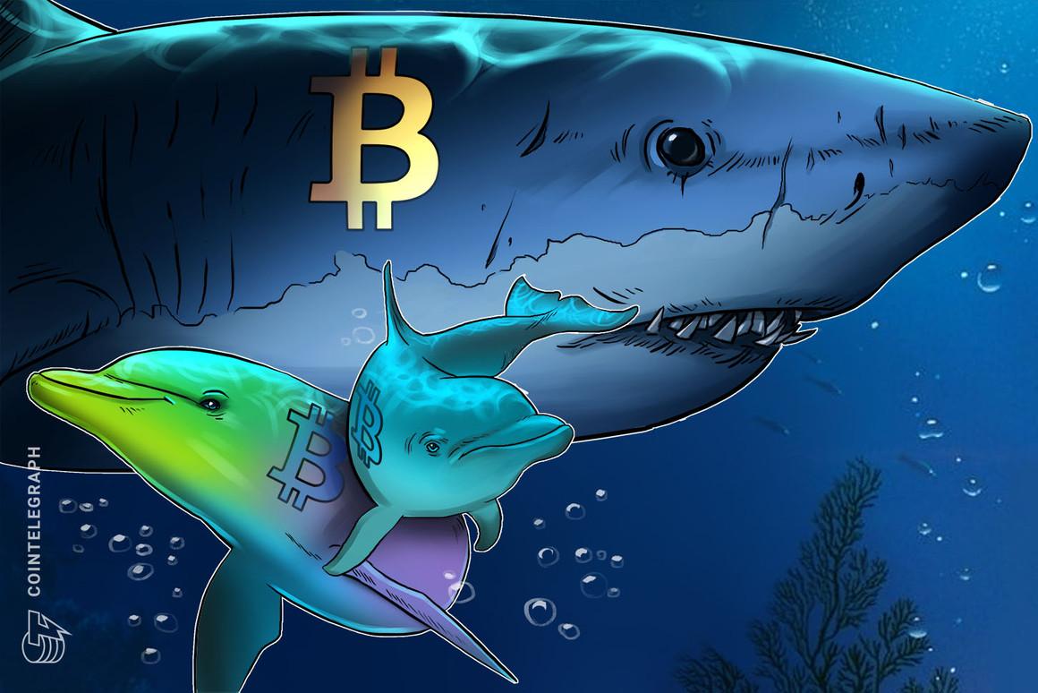 La tendencia alcista de acumulación de Bitcoin puede crear una 'doble alza' en los precios de BTC al estilo de 2013