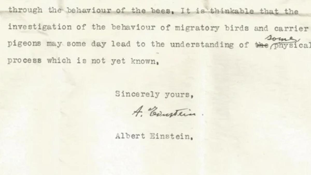 Einstein predijo la existencia de un sexto sentido en las aves para orientarse