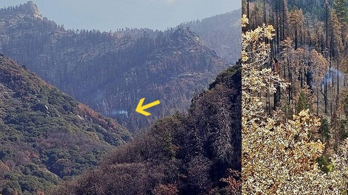 Este árbol de California se mantiene humeante desde hace un año