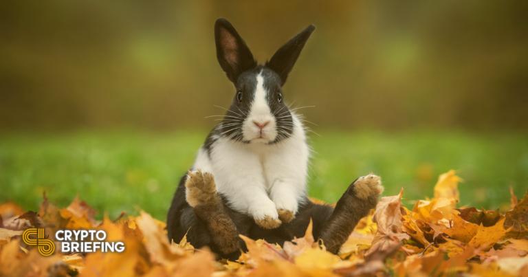 Los problemas persisten en BSC mientras Bunny Finance sufre un ataque