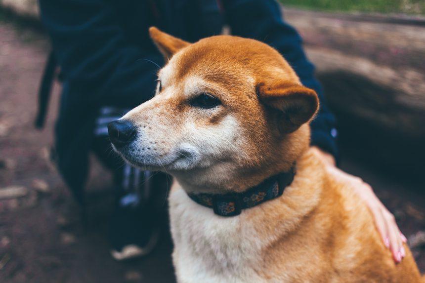 Dogecoin demuestra que los enemigos están equivocados ya que la capitalización de mercado ahora supera a Twitter