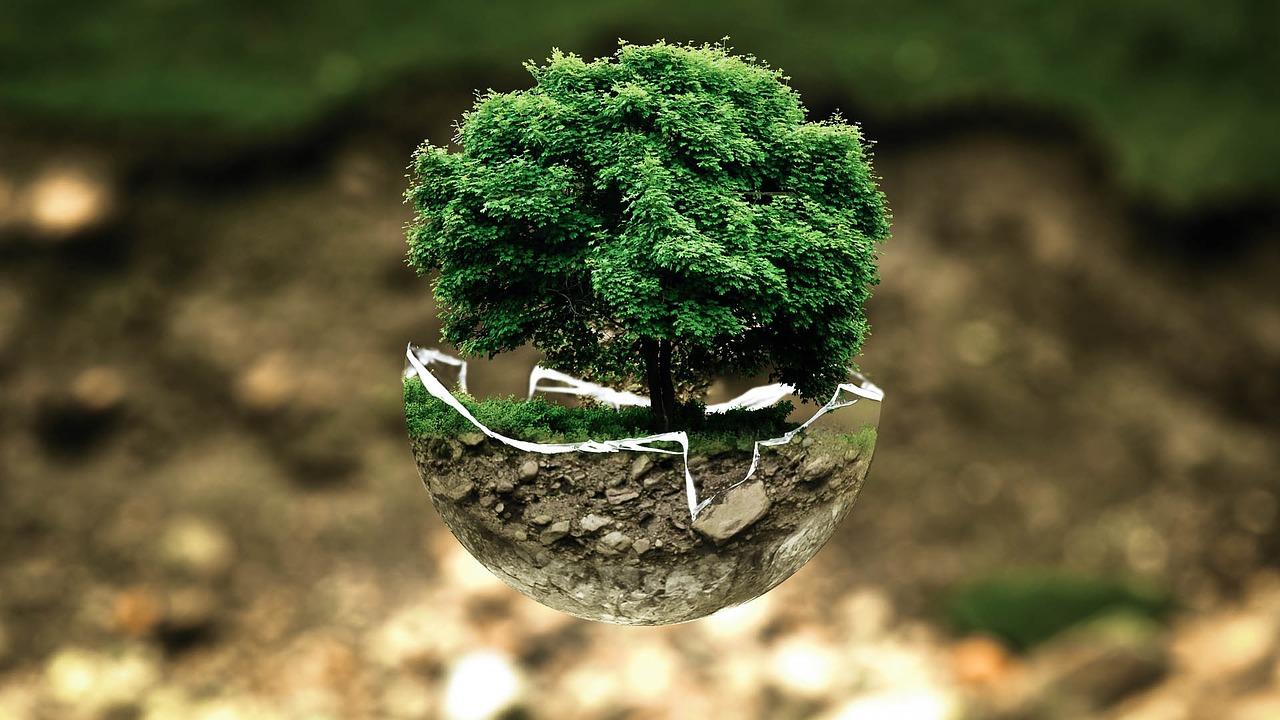 Tupan, fusionando los límites de la regeneración ambiental y el mundo criptográfico