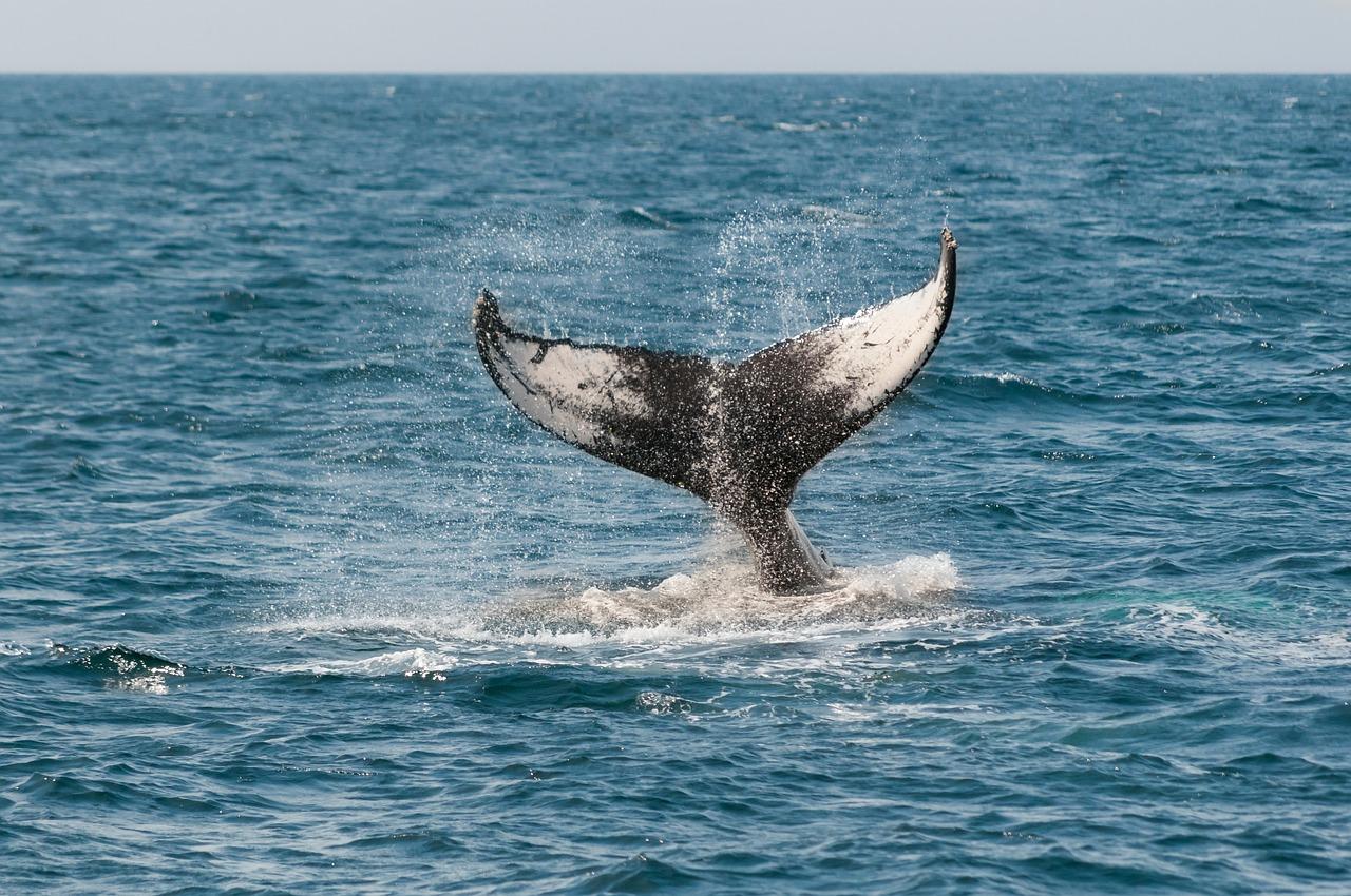 12K BTC eliminados de Coinbase, ¿están perdiendo las ballenas?