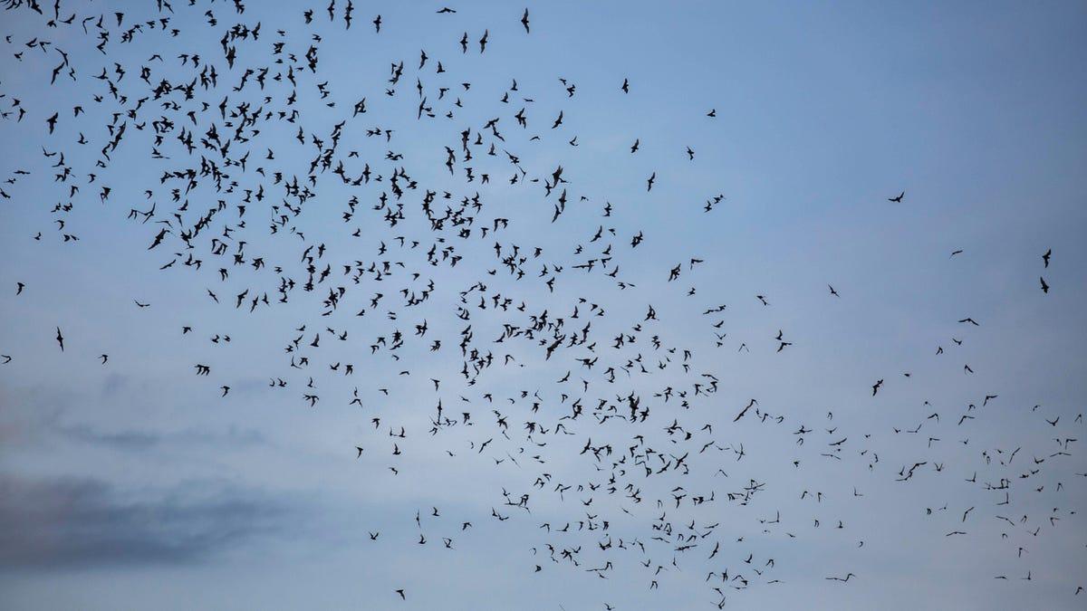 Enseñan a una veintena de personas a usar con éxito la ecolocalización, como los murciélagos