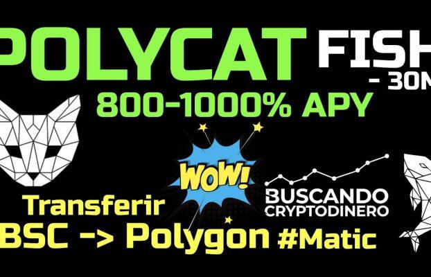 🔥 POLYCAT 800% APY ➤ POLYGON #matic ¿Como transferir desde BSC a Polygon? Y ganar de forma pasiva!!!