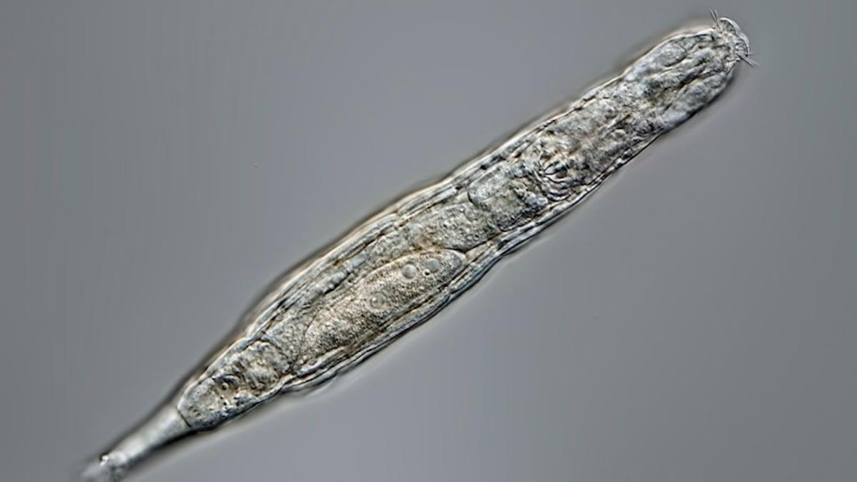 Congelado durante 24.000 años, un animal vuelve a la vida
