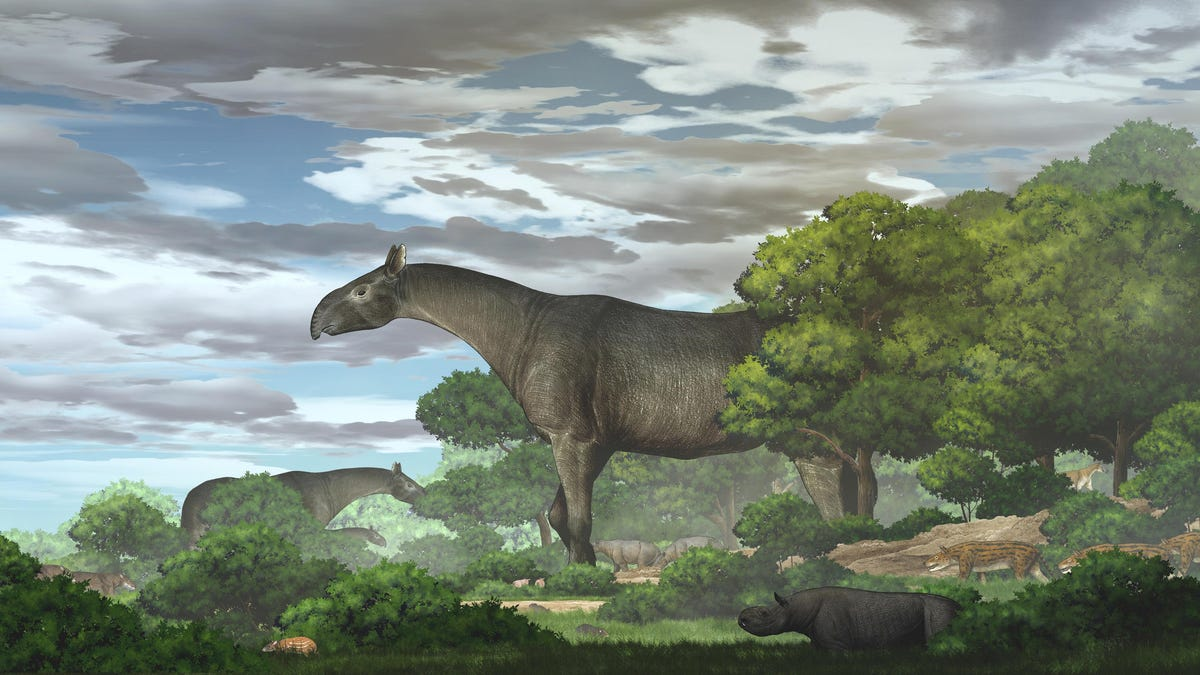 Descubren el fósil de un rinoceronte gigante de cinco metros de altura y 24 toneladas