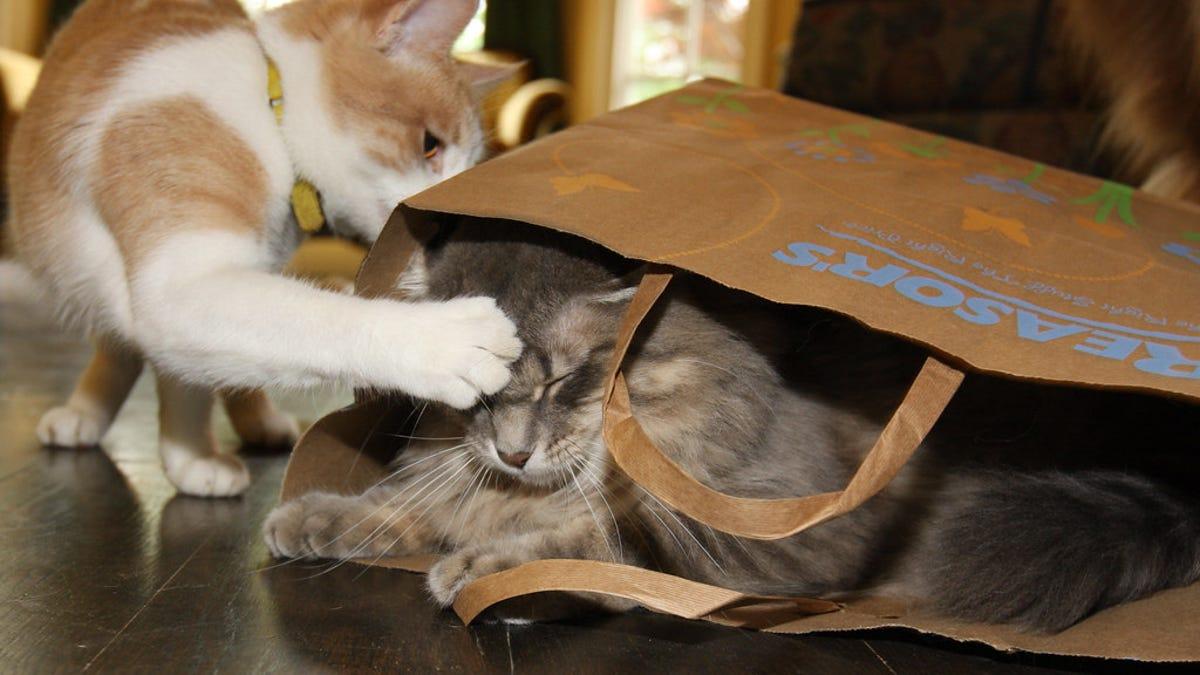 Por qué a los gatos les gusta abofetear y golpear cosas
