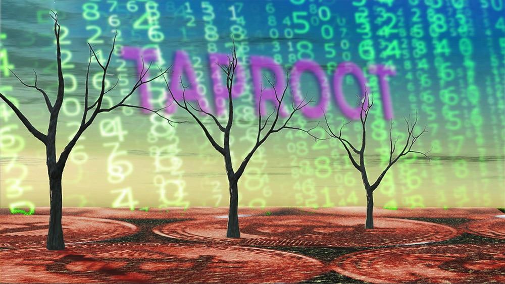 ¿Qué pasa si los nodos de Bitcoin no se actualizan para Taproot?