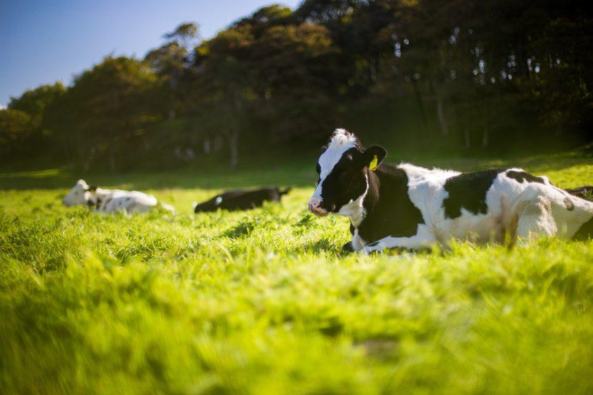 ¿Quién necesita carbón cuando tienes estiércol de vaca?  La minería de criptomonedas se vuelve marrón