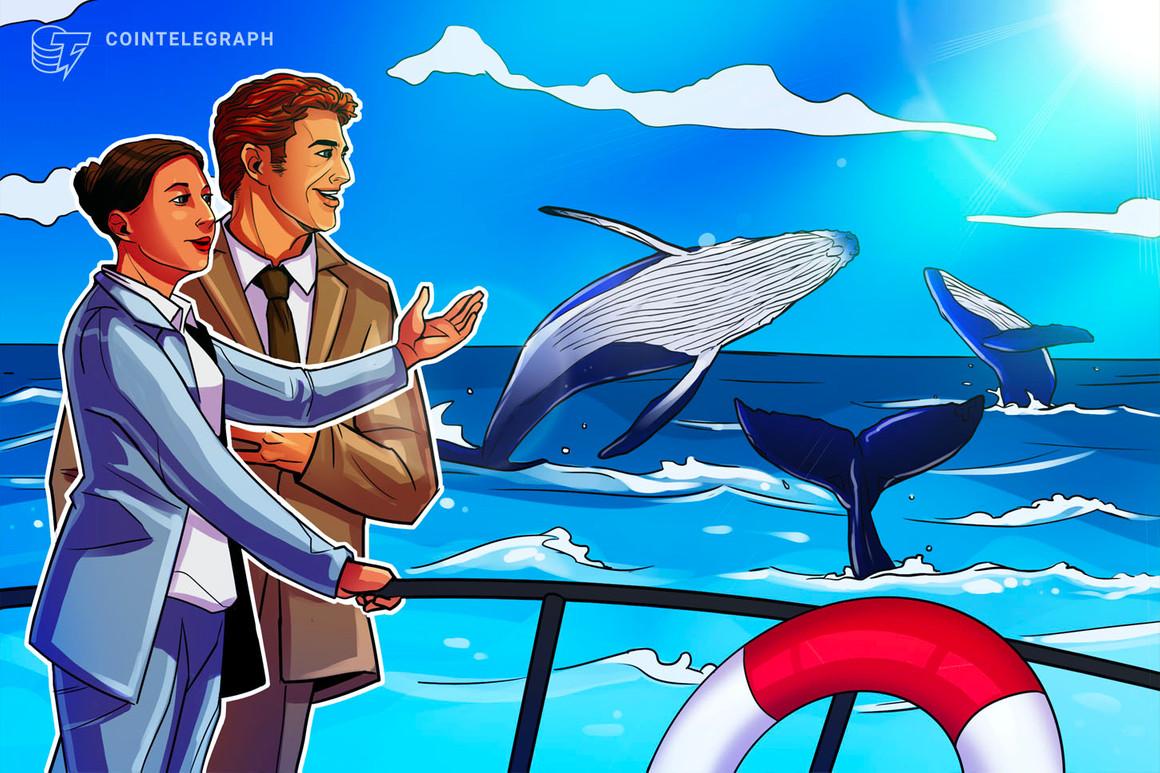 Nuevas entidades de Bitcoin cerca de su pico histórico, en tanto un analista anuncia una 'actividad positiva de ballenas'