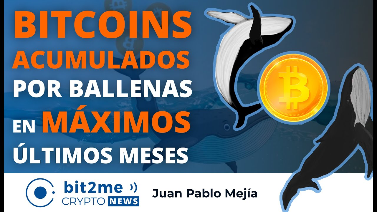 🔵 🐋 BITCOINS ACUMULADOS por ballenas en MÁXIMOS de los últimos meses – Bit2Me Crypto News