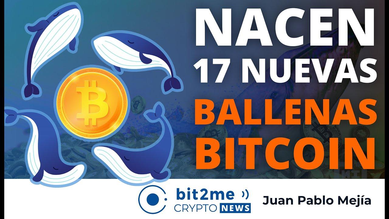 🔵 🐋 Nacen 17 nuevas BALLENAS BITCOIN  – Bit2Me Crypto News
