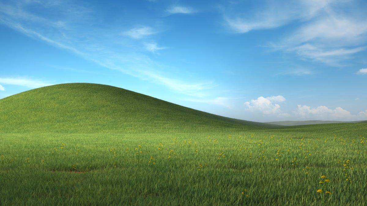 Microsoft relanza el mítico fondo de pantalla de Windows XP, ahora con más flores y detalles