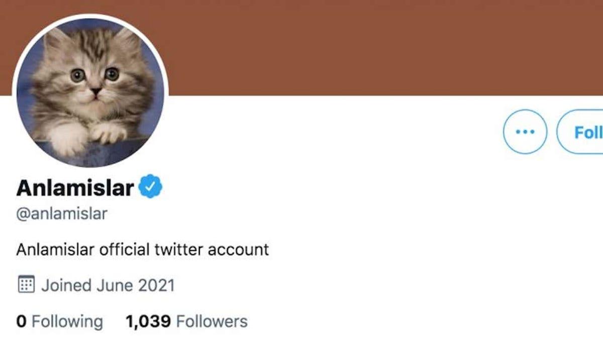 Twitter verifica al menos seis cuentas falsas, incluido un gato