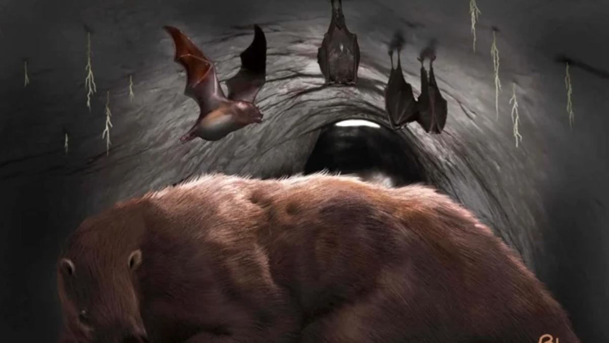 Hallan los restos de un vampiro gigante extinto en Argentina