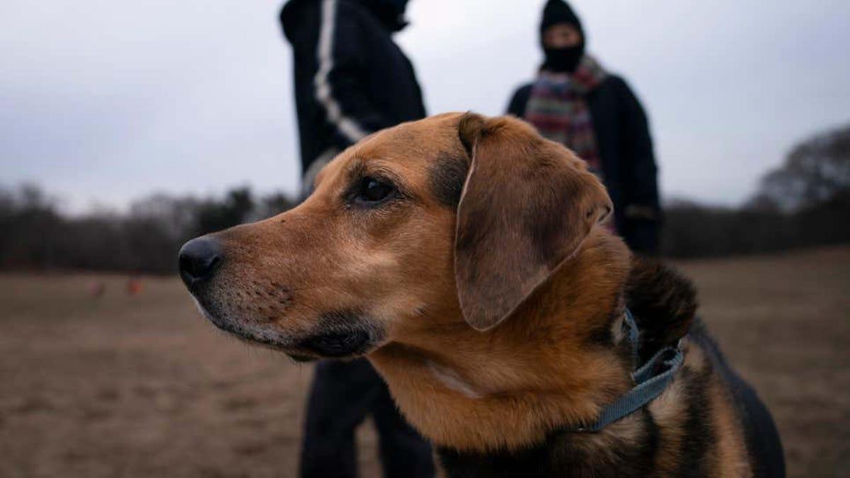 La comida cruda para perros podría impulsar superbacterias
