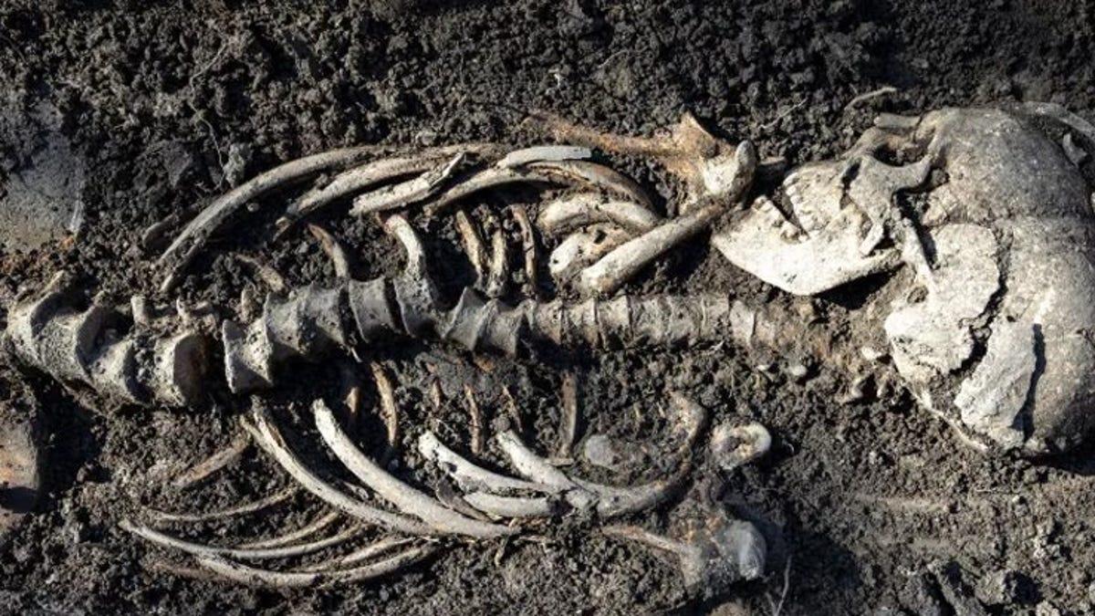 Descubren 7 tumbas y los esqueletos de bebés vikingos gemelos