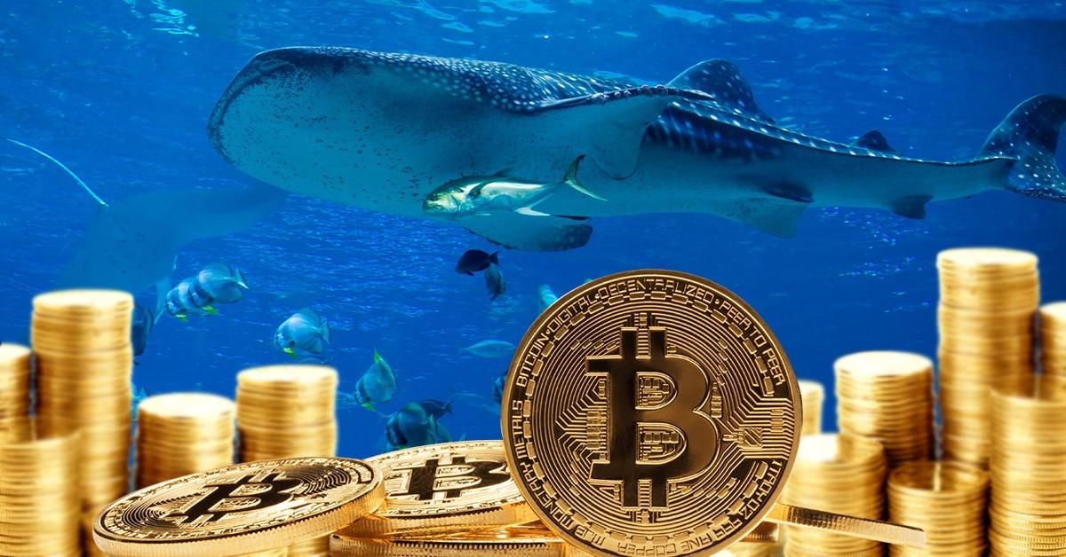 Ballenas y pequeños holders retoman la acumulación de bitcoin