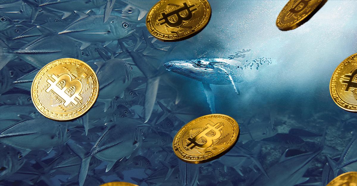 Las ballenas «mega ricas» de bitcoin son una especie en peligro de extinción