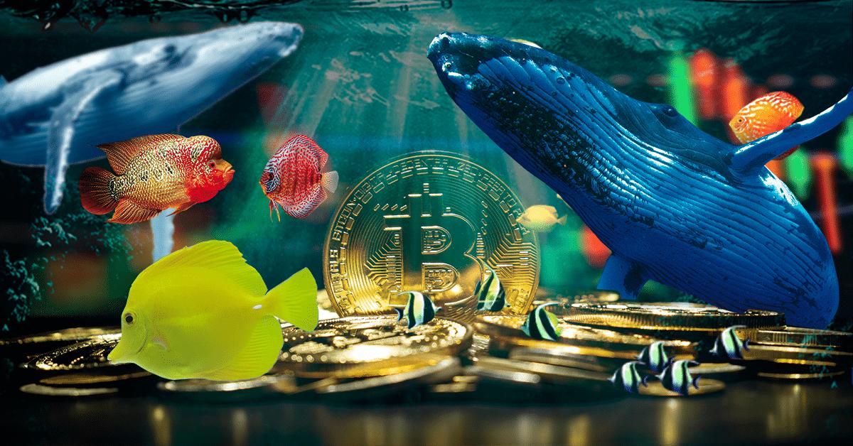 Desde los pececitos hasta las ballenas: todos acumulan más bitcoins