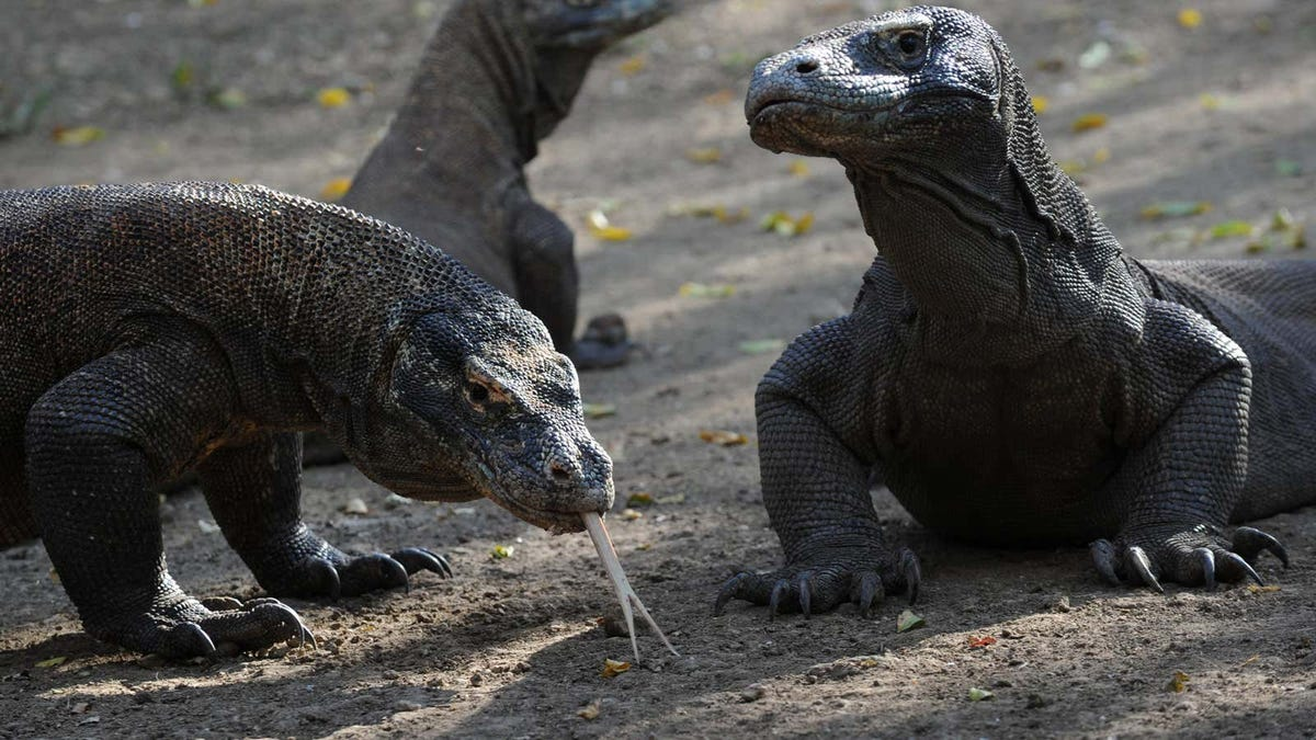 Indonesia y su Parque Jurásico con dragones de Komodo