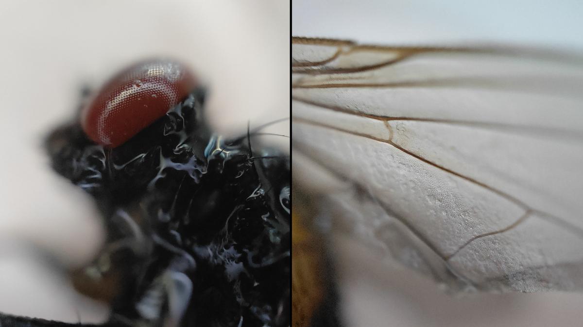5 curiosidades microscópicas que ahora puedes observar con un smartphone