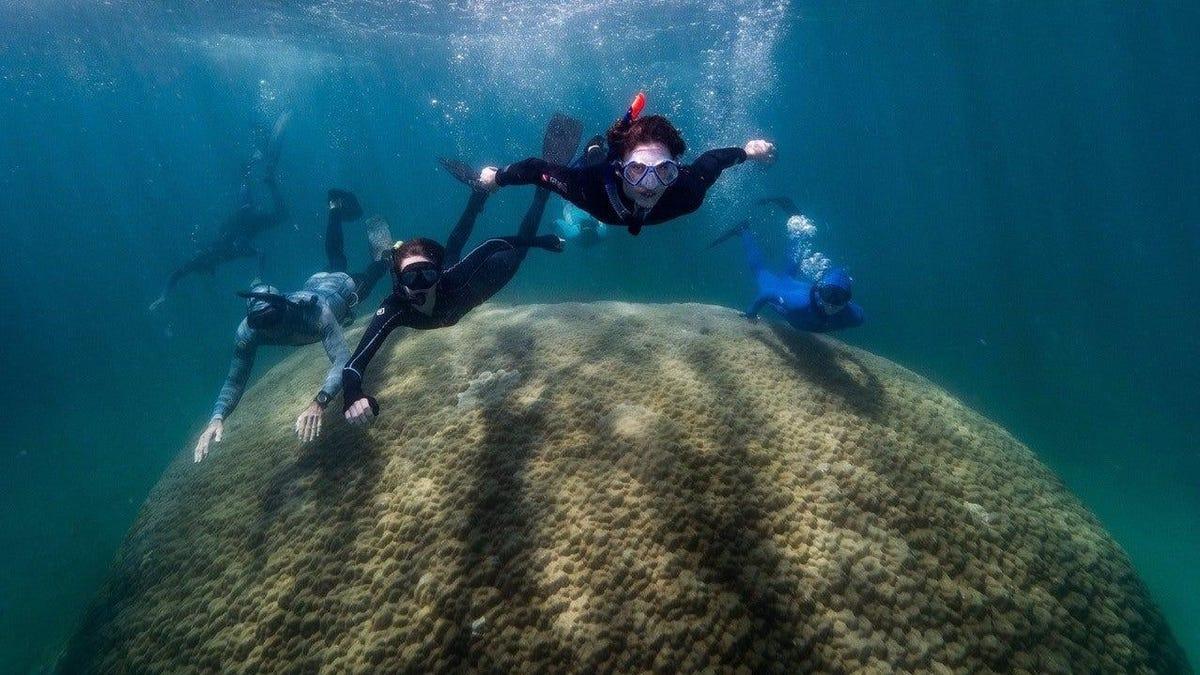 Descubren un coral enorme en la Gran Barrera de Arrecifes
