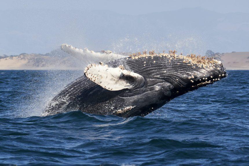 Estos indicadores de Ethereum muestran que las ballenas continúan acumulándose