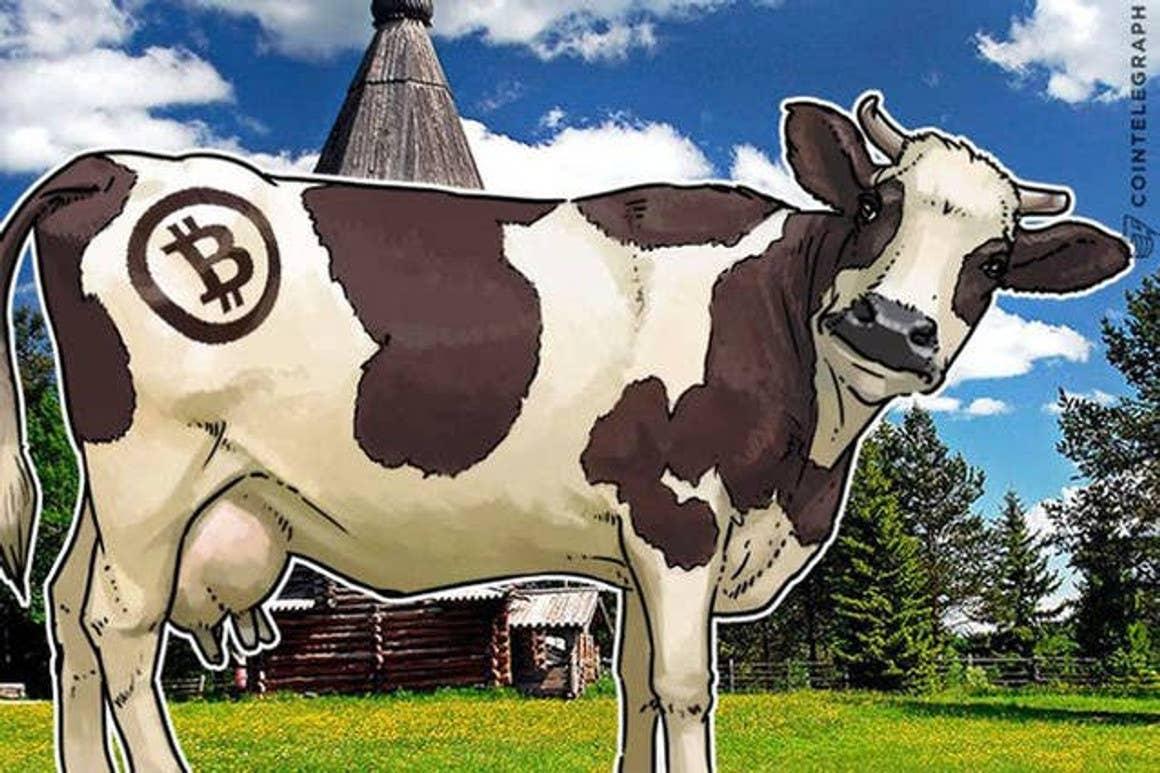 Ganaderos salvadoreños se niegan a aceptar al Bitcoin como forma de pago