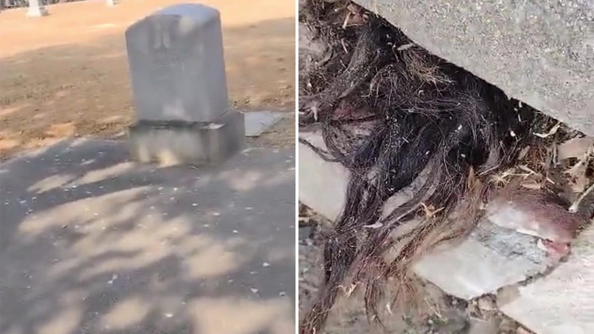 Descubre cabello humano saliendo de una tumba de hace 100 años