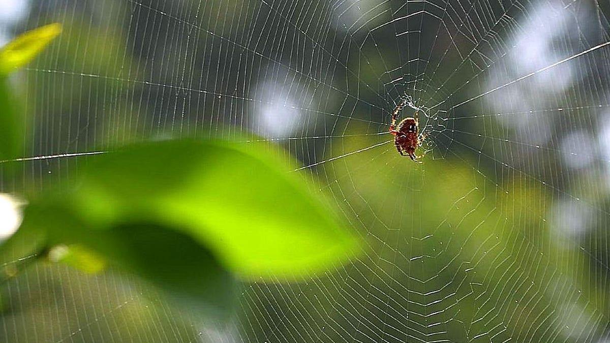 Espectacular timelapse de una araña tejiendo una telaraña