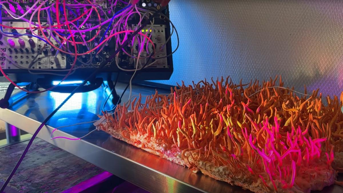 Este artista hace música con hongos