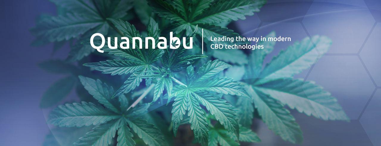 Todo sobre Quannabu, la criptomoneda creada para la industria del cannabis