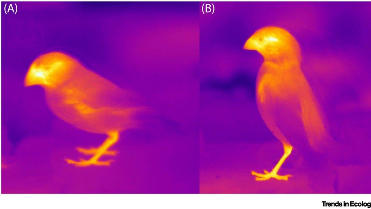 Existen animales que están cambiando su morfología para sobrevivir al cambio climático